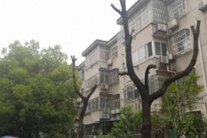 如此修剪小区树木遭剪发居民看了真心痛