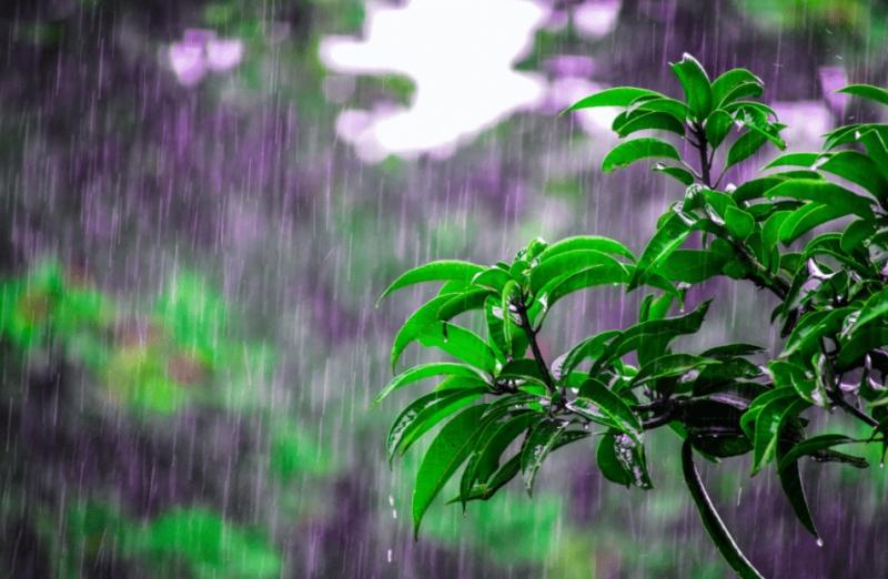 谷雨健脾祛湿食谱轻松做田螺云厨带来进补新方式